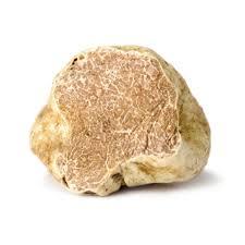 italian white truffle fresh italian white alba truffles 1 2 oz alma gourmet