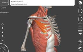 Human Anatomy Atlas Muscle Skeleton 3d Anatomy Android Apps On Google Play