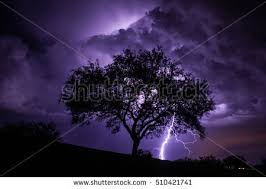 lightning tree stock images royalty free images vectors