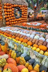 Fall Autumn by 366 Best Gourds And Pumpkins Images On Pinterest Autumn Fall