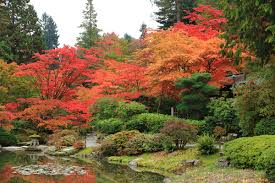 Botanical Gardens Seattle Fall In With The Japanese Botanical Garden The Whole U