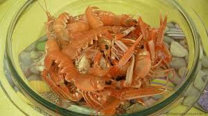 comment cuisiner les langoustines la cuisson des langoustines chez mon poissonnier