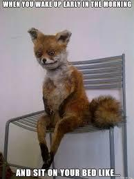 Too Tired Meme - tired fox meme on imgur