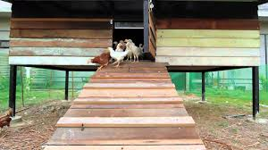 building a coop and raise free range chickens youtube