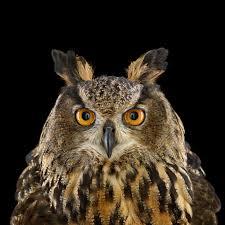 who u0027s who audubon