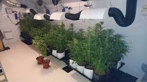 chambre de culture cannabis complete les gendarmes découvrent un important site de culture de cannabis