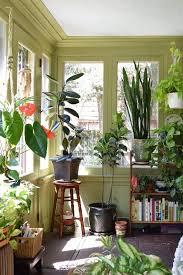 apartment plants natasha and the plant filled sunroom sunroom apartment therapy