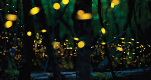 How Do Fireflies Light Up When Will The Fireflies Light Up Your Back Yard Farmers U0027 Almanac