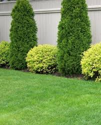 thelawnking your local toronto and etobicoke lawncare and