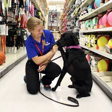 Home Depot Locations London Ontario 33 Dog Friendly Stores