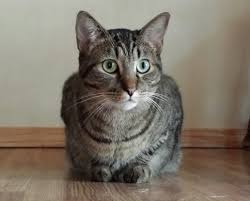 spirit halloween jumping cat death u0026 dying psychic medium u0026 animal communicator charles peden