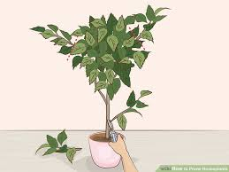 how to prune houseplants 11 steps with pictures wikihow