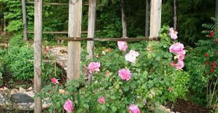 Trellis For Climbers How To Build A Trellis For Climbing Roses Hometalk