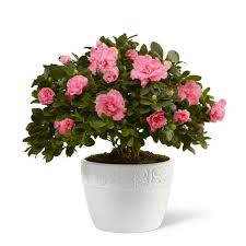 sympathy plants sympathy plants funeral plants plants for funerals