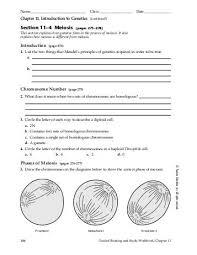 mendel and meiosis worksheet answers 53 images worksheets