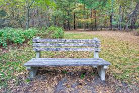 Wooden Park Bench An Old Wooden Bench In A Wooded Area Of A Park Stock Photo