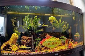 cool vegas theme aquarium viva las vegas