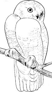 Snowy Owl Coloring Page Animals Town Animals Color Sheet Owl Color Pages