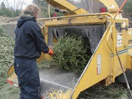 free christmas tree recycling in kirkland by waste management