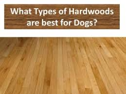Best Flooring With Dogs Best Hardwood Flooring For Dogs Satin Finish Light Colors And Woods