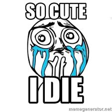 So Cute Meme - so cute i die skype meme meme generator
