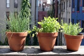 plantes cuisine design exterieur plantes aromatiques cuisine herbes pots balcon