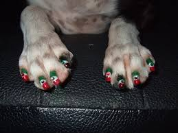 dog manicure sekc u0027s zoo