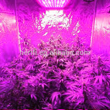 hydroponic led grow lights chinese solar power king led grow ligh 200w 400w 600w hydroponic