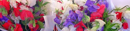 Sweet Pea Images Flower - item listing baker creek heirloom seeds