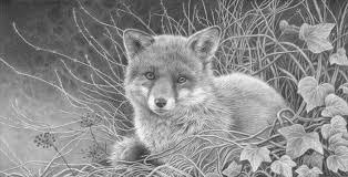 julie rhodes original wildlife art wildlife pencil drawings