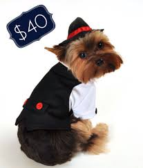 halloween costumes for yorkies dogs your pup will be the godfather in this gangster get up 40