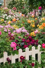 Types Of Flower Gardens 3005 Best Rose Images On Pinterest Beautiful Flowers David