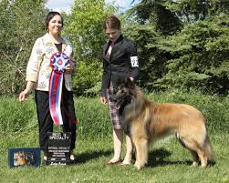 belgian sheepdog canada belgian sheepdog nationals 2016