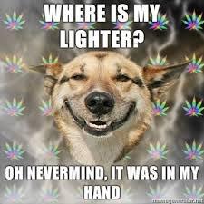 Law Dog Meme - image 49193 stoner dog know your meme