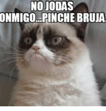 21 Of The Best Grumpy - 25 best memes about grumpy cat jingle bells grumpy cat jingle