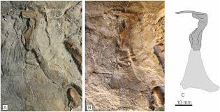 Plos One The Oldest Jurassic Dinosaur A Basal Neotheropod From