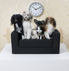 the new ikea range for cats and dogs leicester mercury
