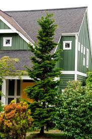 Azalea Topiary Slender Hinoki False Cypress Monrovia Slender Hinoki False Cypress