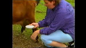 Backyard Dairy Cow Rapid Mastitis Test In A Milking Goat Youtube
