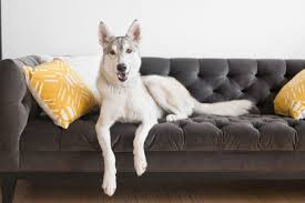 best sofa fabric for dogs sofa trendy best couch fabric for dogs 0 dark schemed dog best