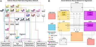 applying gene regulatory network logic to the evolution of social