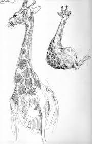 giraffe sketch 2005 by evanjensen on deviantart