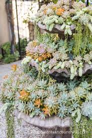 13 succulents that are native 13 best succulents images on pinterest evergreen flower and