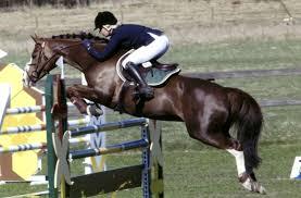La Luna och ägaren Manda Boström. Bild: Privat. För några veckor sedan berättade Sportkollen berättelsen om hästen som plötsligt blev en ponny. - 126573