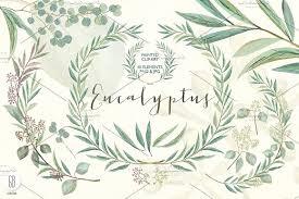 eucalyptus wreath eucalyptus wreath and leaves illustrations creative market