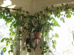 beautiful house plants beautiful house plants awesome seven ways to beautiful houseplants