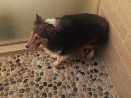 Dog In Shower by Paula Toti On Twitter