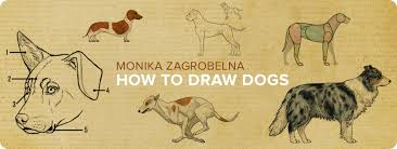 how to draw a dog details make the difference