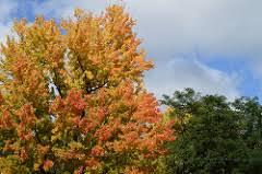 fall color tours northern michigan upper peninsula michigan