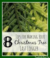 real christmas tree care tips from set up to clean up real